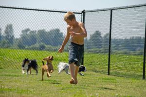 boy running with dogs in fenced yard