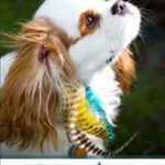 brown and white dog with feathers in hair