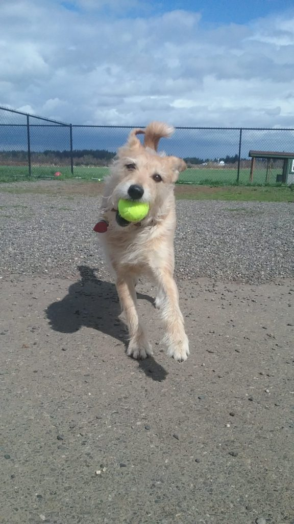 bodie-with-ball-2