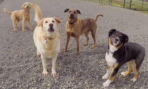 Group of dogs posing for the camera